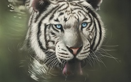 White tiger face, blue eyes, tongue