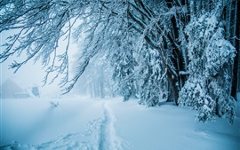 Winter, thick snow, path, trees