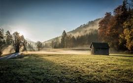 Casa de madeira, grama, árvores, névoa, manhã