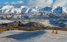 Altay, mountains, trees, snow, winter