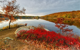 Autumn, lake, trees, stones, red leaves