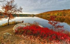 Otoño, lago, árboles, piedras, hojas rojas