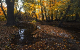 Preview wallpaper Autumn, trees, stream, yellow leaves