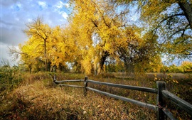 Preview wallpaper Autumn, trees, yellow leaves, grass, fence