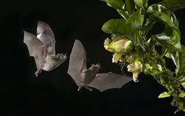 미리보기 배경 화면 박쥐, 꽃, 밤