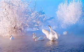 Preview wallpaper Beautiful winter morning, lake, trees, snow, white swans