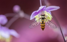 Preview wallpaper Bee, purple flower, insect macro photography