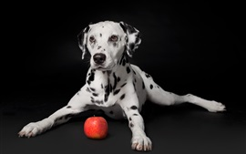 Black background, puppy and apple