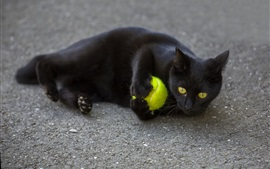 Black cat play a ball on ground