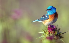 Preview wallpaper Blue feather bird, look back, flower
