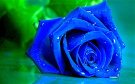 Preview wallpaper Blue rose macro photography, petals, water drops