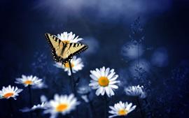 Mariposa, manzanilla, flores, bokeh