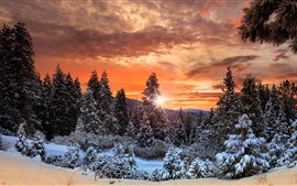 Preview wallpaper Canada, clouds, forest, trees, snow, winter, sunset