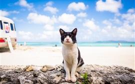 Cat look at you, beach, sea, clouds