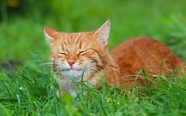 Cat rest, green grass
