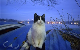 Preview wallpaper Cat, river, night