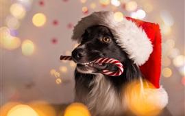 Рождественская собака, конфеты, блики