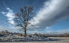 Clouds, tree, grass, snow, winter
