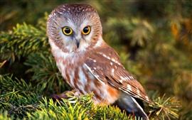 Preview wallpaper Cute little owl, bird, twigs