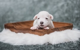 Filhote de cachorro bonito, cão, descanso