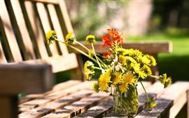 Flores de diente de León, banco, verano