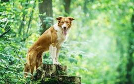 Preview wallpaper Dog in the forest, green, stump