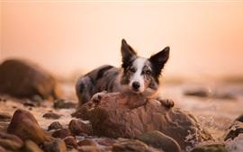 Cão, rochas, respingo de água