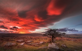 Preview wallpaper England, Dartmoor National Park, trees, stones, grass, red clouds, sunset