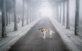 Preview wallpaper Fog, trees, road, dog, snow, winter