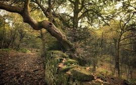 Floresta, pedras, caminho, musgo
