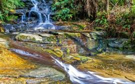 壁紙のプレビュー 森林、川、滝、岩、苔