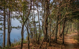 Лес, деревья, тропинка