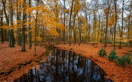 Preview wallpaper Forest, trees, river, autumn