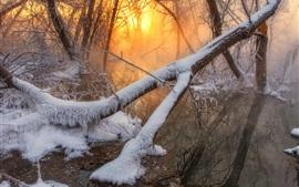 Floresta, árvores, neve, rio, amanhecer, manhã