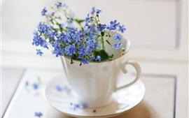 Nomeolvides, flores azules en la taza