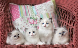 Preview wallpaper Four white kittens, basket