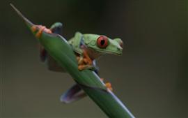Лягушка спереди, красные глаза