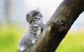 Preview wallpaper Furry kitten climbing tree