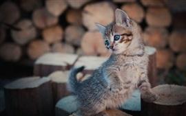 Mirada de gatito peludo