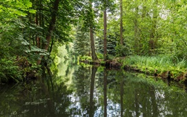 Alemanha, Spreewald, rio, floresta, verde