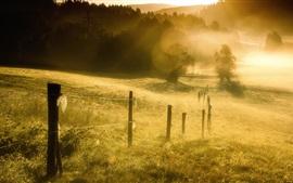 Grama, cerca, nevoeiro, manhã