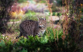 Preview wallpaper Gray cat look back, grass, nature