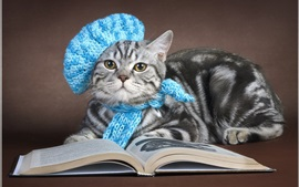 Preview wallpaper Gray cat read book, cap, scarf