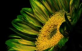 Flor de pétalos verdes, pistilo