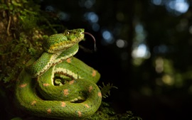 Preview wallpaper Green snake in the nature