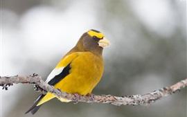 Pájaro de plumas amarillas