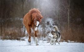 Лошадь и собака, бегущие по снегу