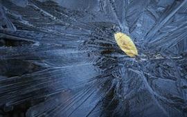 얼음, 냉동, 잎