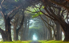 Preview wallpaper Ireland, trees tunnel, road, fog, grass, morning