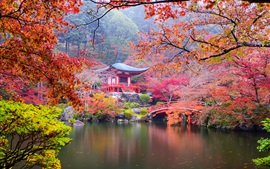 Japan, Kyoto, park, pagoda, colorful leaves, trees, pond, autumn